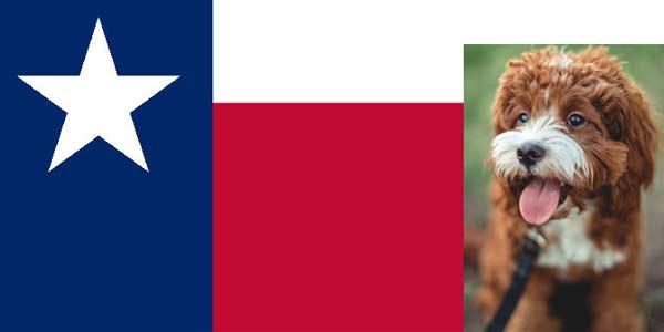 Cavapoo puppies - Texas  List of cavapoo breeders in Texas